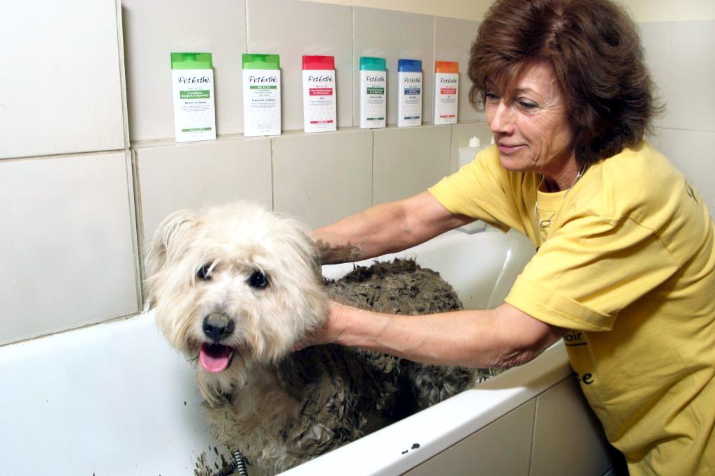 chien baignoire